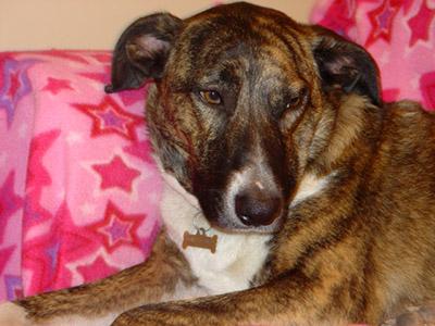 A mixed breed dog